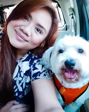 This furball of joy and I went to the @petexpressph Dog & Cat expo 2019 last July 20 and we managed to vlog about it. YES, you read it right... VLOG! The link is on my profile if you are interested! 🐶🐱 #PetExpressPH #chubbsterbuster #NinaVlogs #DogandCatExpo2019 #PetExpo2019