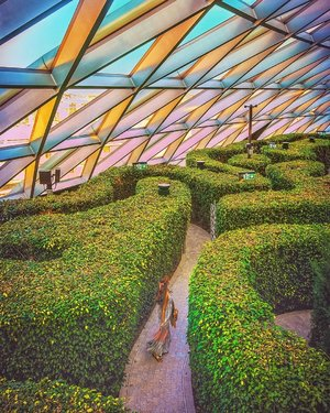 Getting lost in the Hedge Maze at the Changi airport's Jewel Canopy Park.⁣ ⁣ Photography tips : You need a friend to help you shoot from a staircase overlooking this maze. You can't use a self-timer because this is a maze, you need time to find your way in and out of the maze 😂⁣ ⁣ See today's story for the BTS. Thank you @yuniqueyuni and @blackivory for helping me to take this shot. ⁣ ⁣ The Canopy park is Singapore's the latest recreational wonderland that was opened 10th June this year. The park occupies 14,000 sqm on the top floor of Jewel. Admission tickets are require. As a Singapore resident I paid S$10.80 for the Hedge Maze ticket which includes access to the Discovery Slides, Foggy Bowls, Petal Garden, Topiary Walk and that secret garden view of the waterfall with the giantic bonsai tree which I posted few days ago.⁣ ⁣ For Singapore residents child/ senior the Hedge ticket costs S$7.20. For foreigners the adult it cost S$12, child/ senior S$8⁣ ⁣ Anyone coming to Singapore this year? ⁣ .⁣ .⁣ .⁣ .⁣ .⁣ #singapore  #singaporeworld #Seejewel #visitsingapore #exploresingapore #singaporechangiairport #singaporeinsiders #canopypark