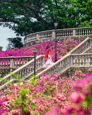 Discover Singapore 🇸🇬 l  Telok Blangah Hill Park⁣ ⁣ This Terrace garden at the Telok Blangah Hill Park is filled with Bougainvillea. This is not a typical tourist spot. Located at the south part of our island. ⁣ ⁣ Personally, I find it not easily accessible by our Harbour Front MRT Station as you still need to take a bus from there. ⁣ ⁣ Since this location has been popping up so frequently by our local influencers so I have included it as one of the most instagrammable place in Singapore in my recent blog post. I also included a Google map of the locations for you. ⁣ ⁣ Check out the link to my Singapore blog post in my IG profile bio. ⁣ ⁣ For my Singapore content and most instagrammable places hashtag ➡️🇸🇬#FollowChertoSingapore⁣ ⁣ 📸Singapore Photographer @wilsonisalmostsexy⁣ .⁣ ⁣