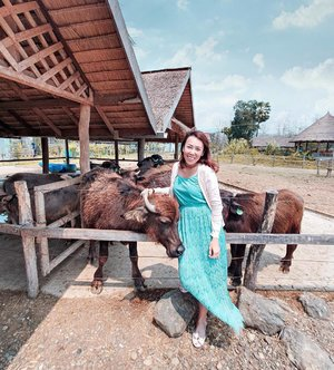"""What seems like my bonding moment with the buffalo is actually the buffalo mistaking my dress for its food. Lol.  Moments after this shot, I was laughing at the fact that it was chewing my dress.  What's your moment? Quote """"HannahC"""" to enjoy 15% off when you shop on http://www.danielwellington.com/ . . . . 📸: @travelinspiration360 . . #flyScoot #Scootitude #Scoot2Laos #Scoot2LuangPrabang #Scoot2Vientiane #clozette #seetheworld #aroundtheworld #beautifulplaces #passionpassport #womenwhoexplore #thetravelwomen #citizenfemme #sheisnotlost #girldiscoverers #shewhowanders #roamtheplanet #wearetravelgirls #borntotravel #femmetravel #travelstoke #travel3sixty #livetravelchannel #globetrotter #traveltheworld #mhctravelogue #ootd  #DanielWellington #DWMOMENTS"""